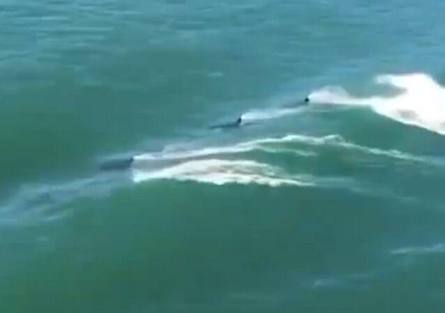 Orcas escorting a ship