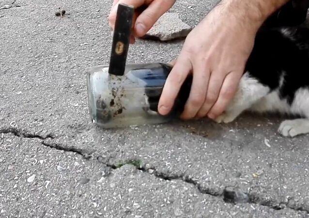 Cat stuck in a glass jar