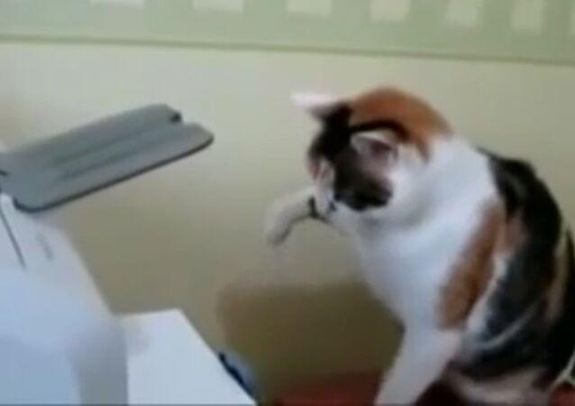 Cat vs. printer