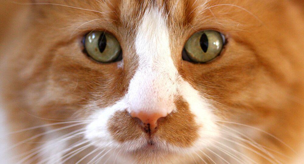 Cat Ripper in Croydon is an Alien