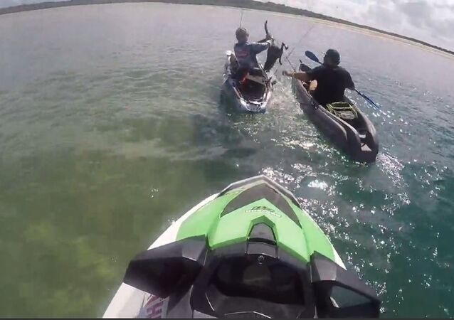 Baby Wallaby Stuck in Open Waters Rescued via Jet Ski