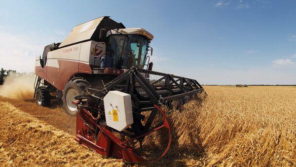Combine harvester works the fields in southern Russia's Krasnodar Territory - Sputnik International