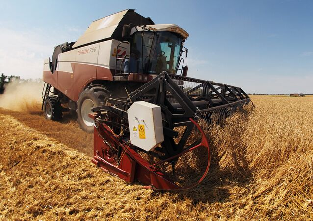 Combine harvester works the fields in southern Russia's Krasnodar Territory