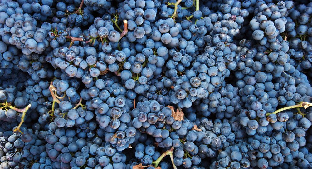 UPPA Winery in Crimea