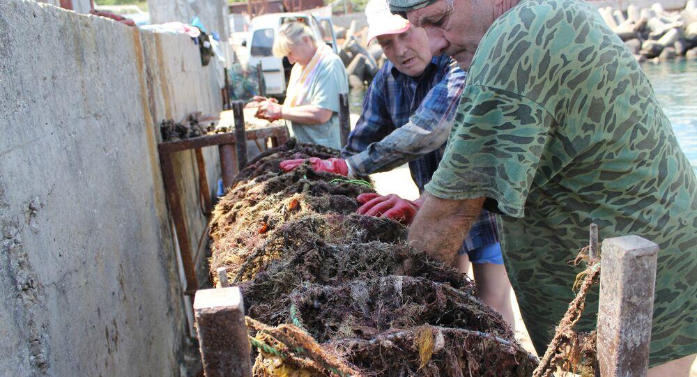 Employees of an oyster farm near Simeiz, Crimea, cheking oyster nets