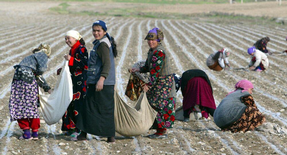 Women pick cotton near the town of Andijan, East of Tashkent, Uzbekistan, Wednesday, April 6, 2005
