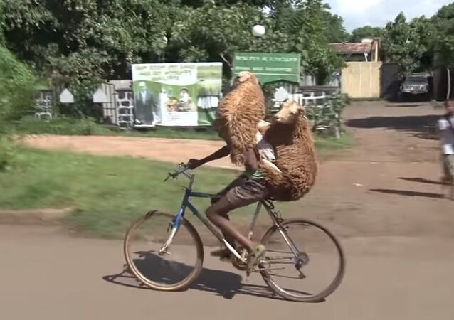 Ethiopian Shepard Carries Two Sheep on Bicyle