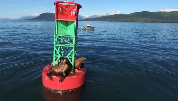 Sail On, Sea Lion - Sputnik International