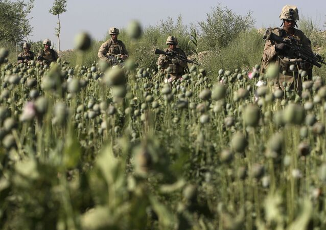 U.S. Marines, from the 24th Marine Expeditionary Unit, pass by a poppy field as they patrol near the town of Garmser in Helmand Province, Afghanistan (File)