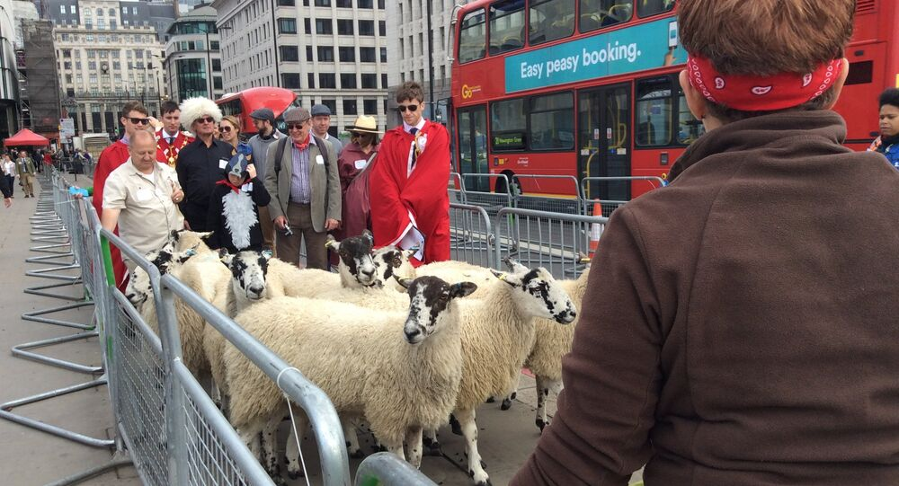 Former Racing Driver Nigel Mansell swaps Fast Cars for Sheep in London