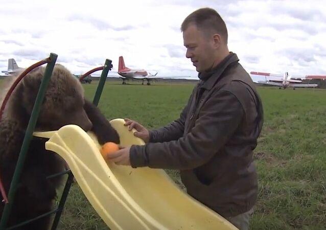 Stray Bear Cub Takes Airfield As Home