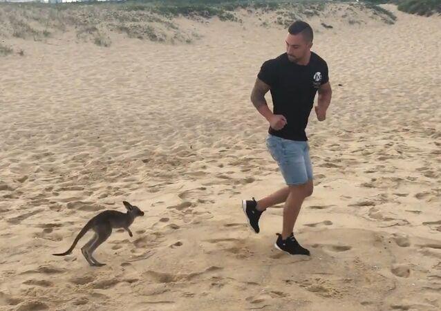 When Your Pet Kangaroo Is Your Best Friend..