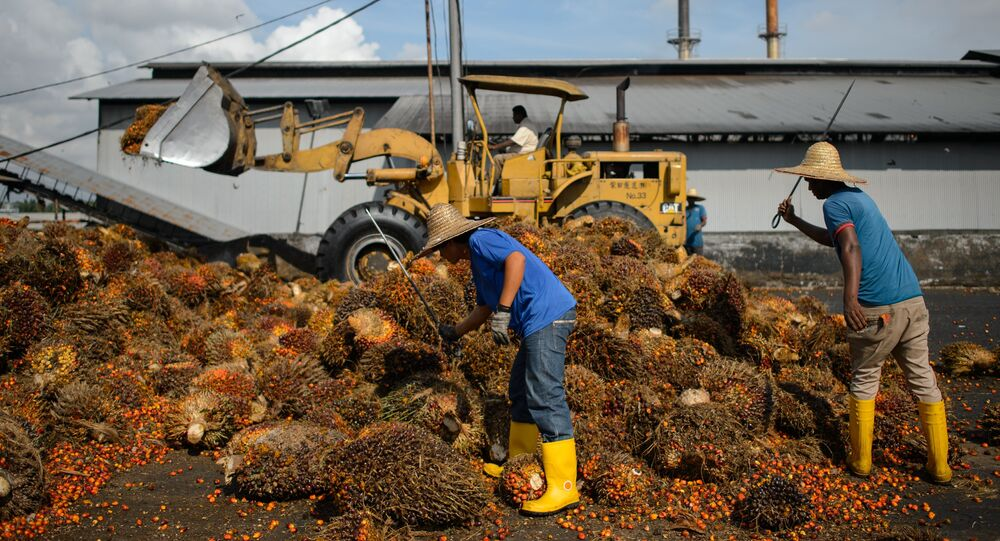 Workers inspect the quality of palm oil fruits at a factory in Sepang, outside Kuala Lumpur on November 20, 2014