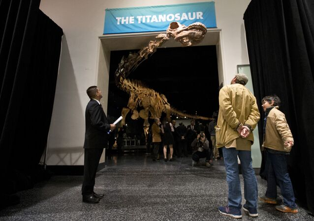 A replica of a 122-foot-long titanosaur on display at the American Museum of Natural History in New York.