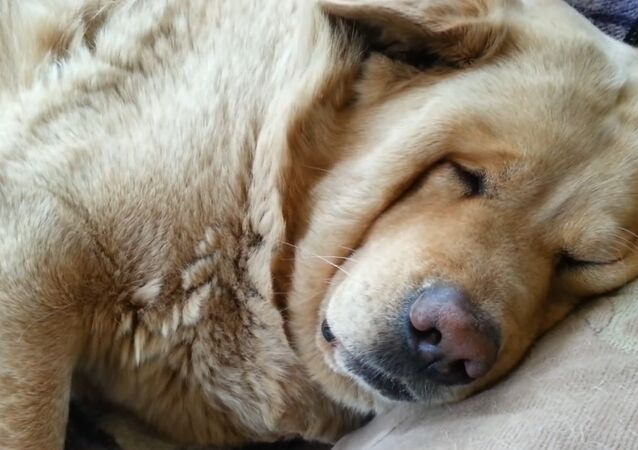 My dog snores....loudly!