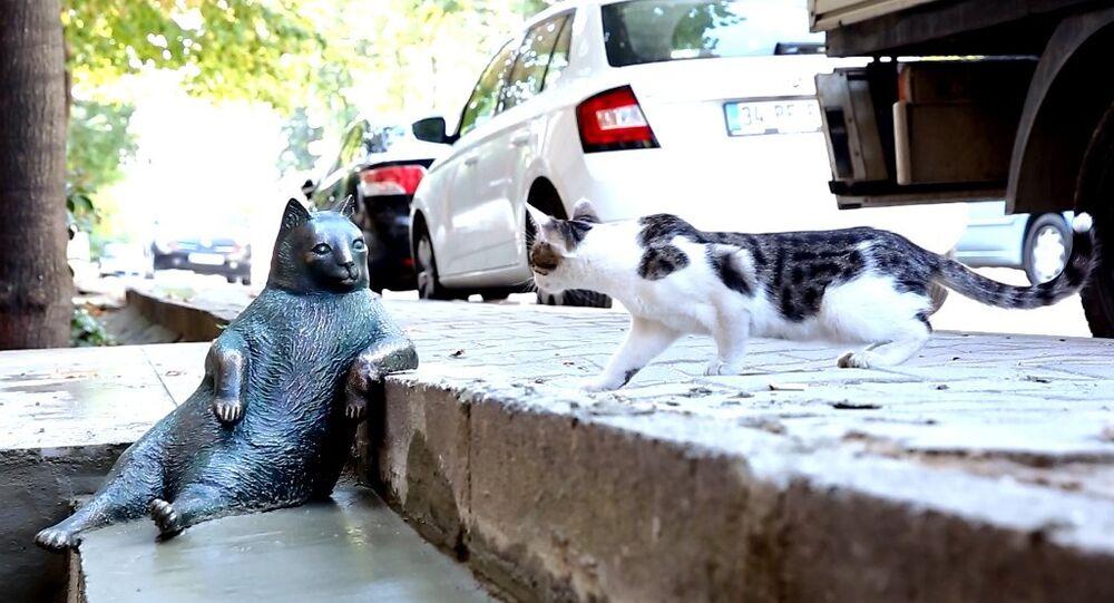 Kedi Tombili'nin heykeli açıldı