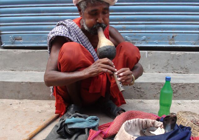 A local Snake Charmer from North India, referred to as 'Sapera Baba'