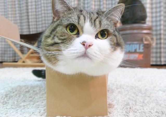 Box and Maru