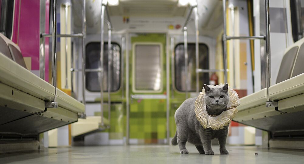 British Cat Becomes a Passenger on Shakespeare's Train in Moscow Metro