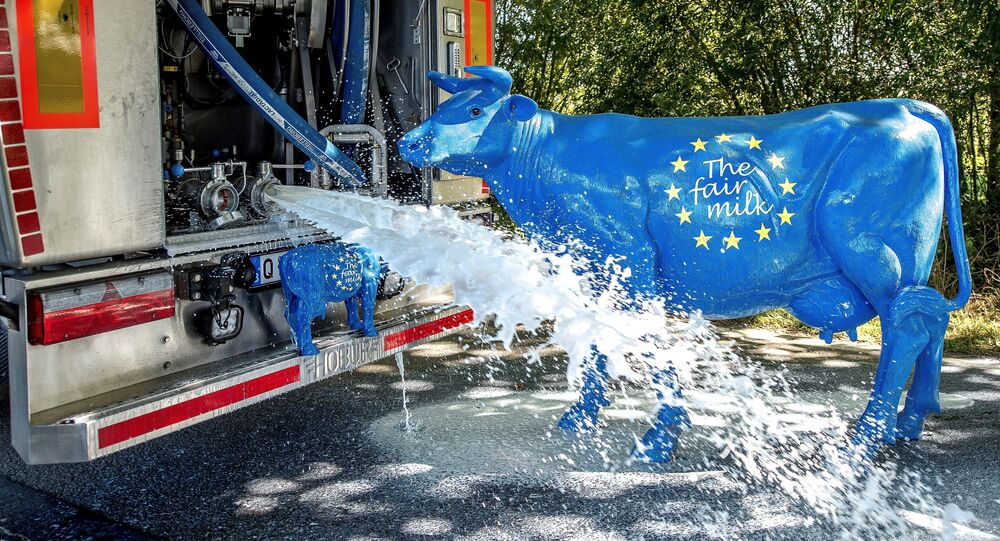 Two sculptures of cow bearing the color of the European flag with an inscription reading The fair milk are pictured next to a milk truck from the Mille Vaches farm pouring its 23000 liters of milks after members of Confederation Paysanne's French farmers union and FUGEA's Belgian farmers union intercepted on a Belgian road near the French town of Bailleul on September 9, 2016 during an operation to protest against milk purchase conditions by dairies