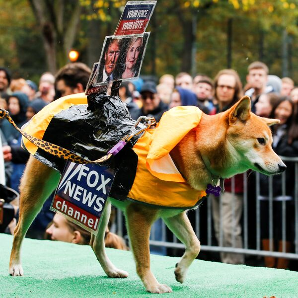 A dog dressed as Fox News channel with the pictures of Democratic U.S. presidential nominee Hillary Clinton (R) and Republican U.S. presidential nominee Donald Trump takes part in the annual halloween dog parade at Manhattan's Tompkins Square Park in New York, U.S. October 22, 2016 - Sputnik International