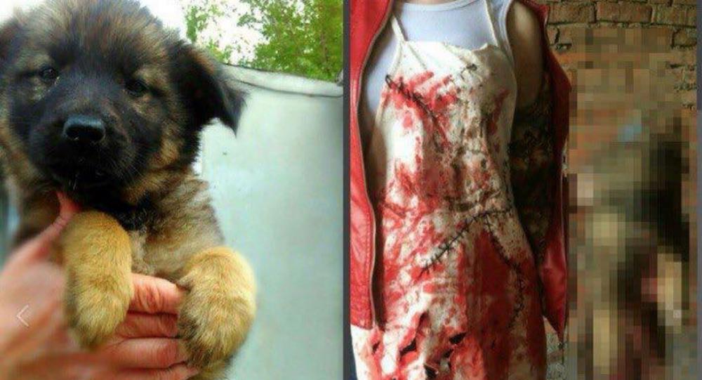 Animal cruelty in Khabarovsk