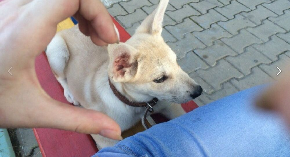 A photo of animal cruelty in Khabarovsk uploaded to a social network by the suspect
