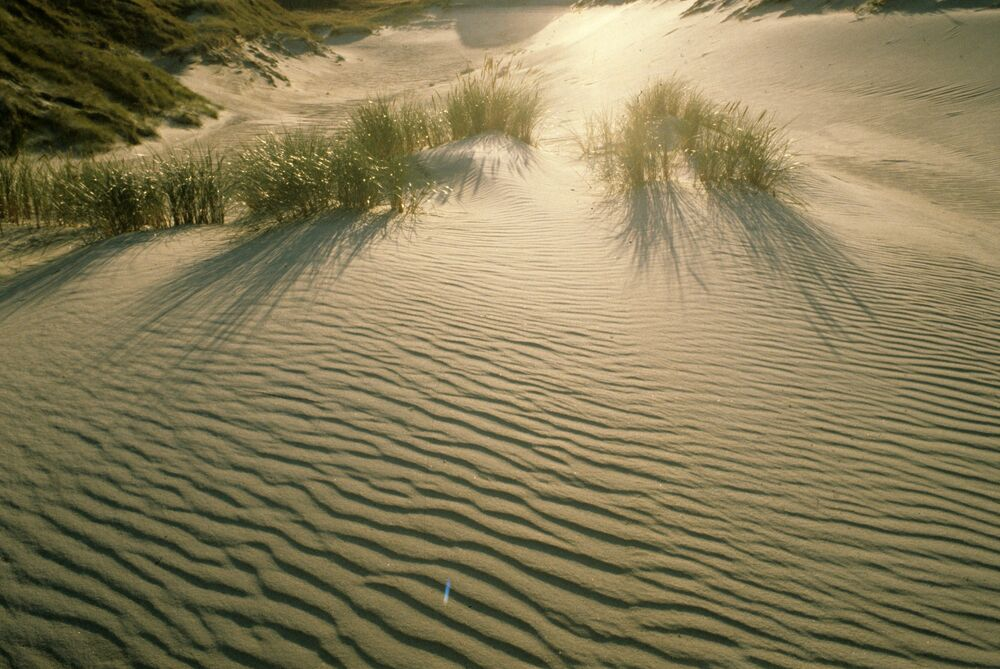 Sand dunes of the Curonian Spit are among the highest in Europe.