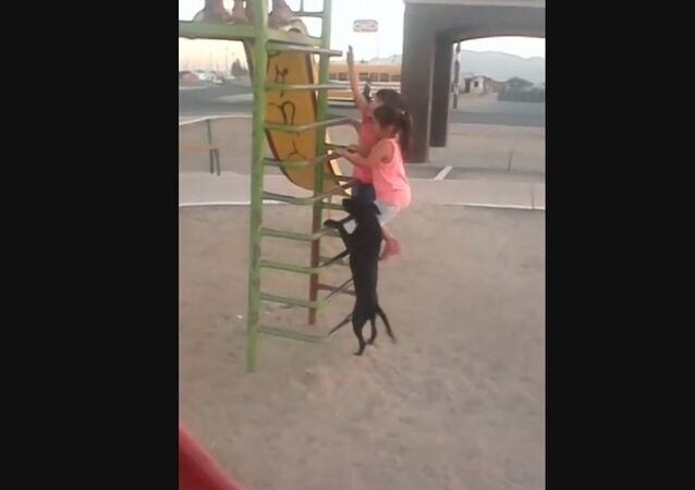 Dog in Mexico climbs ladder to go down slide