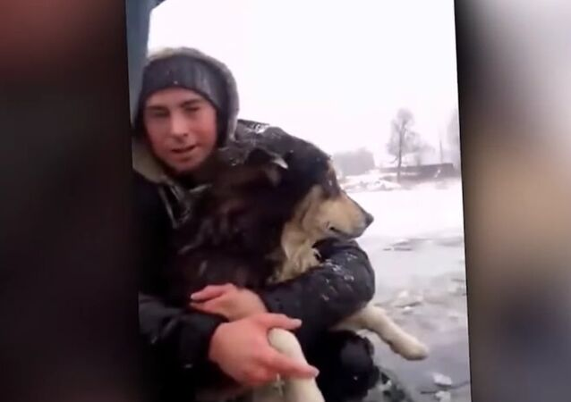 Road Workers Rescue Dog That Fell Through Thin Ice