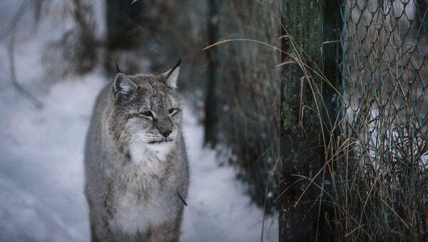 Lynx - Sputnik International