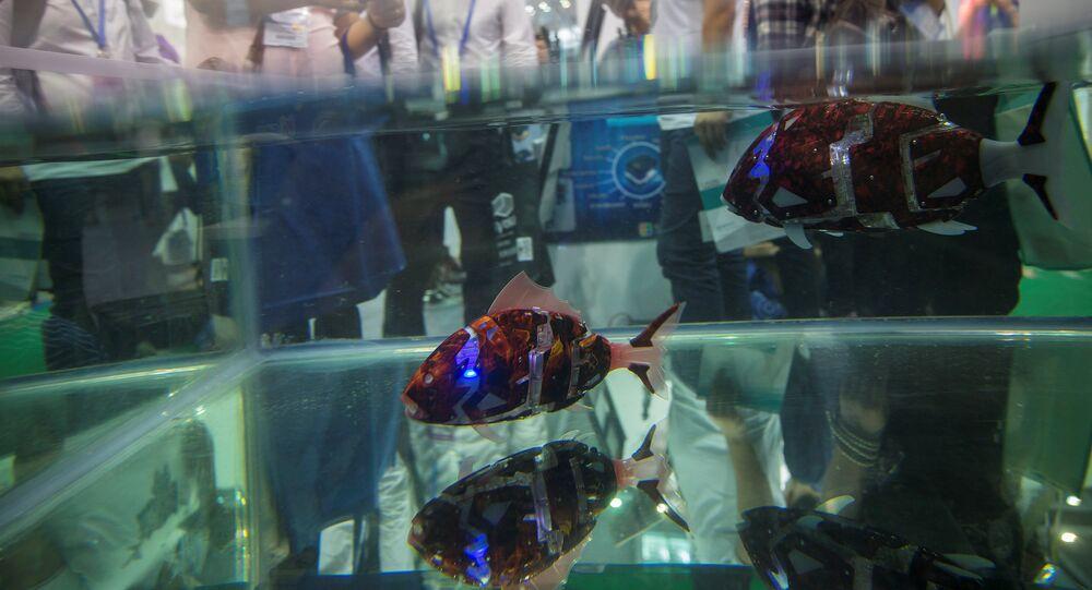 Fish robots swim in a pool during China Hi-Tech Fair in Shenzhen, China, November 16, 2016. Picture taken November 16, 2016