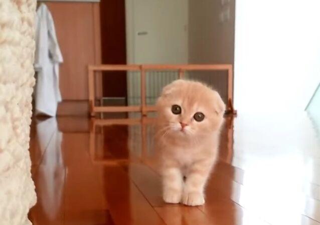 Kitty Gets Sneakily Close to Owner DailyPicksandFlicks DailyPicksandFlicks