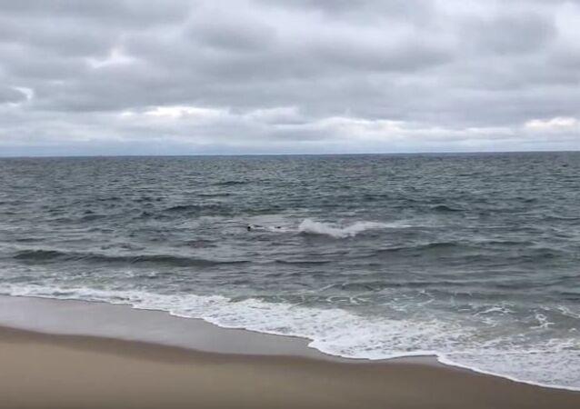 Shark attack at High Head