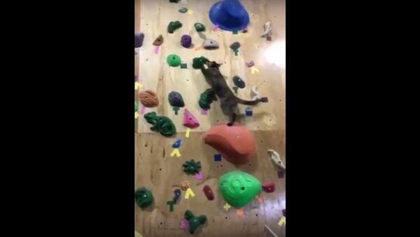 Cat climbing a rock wall - Sputnik International