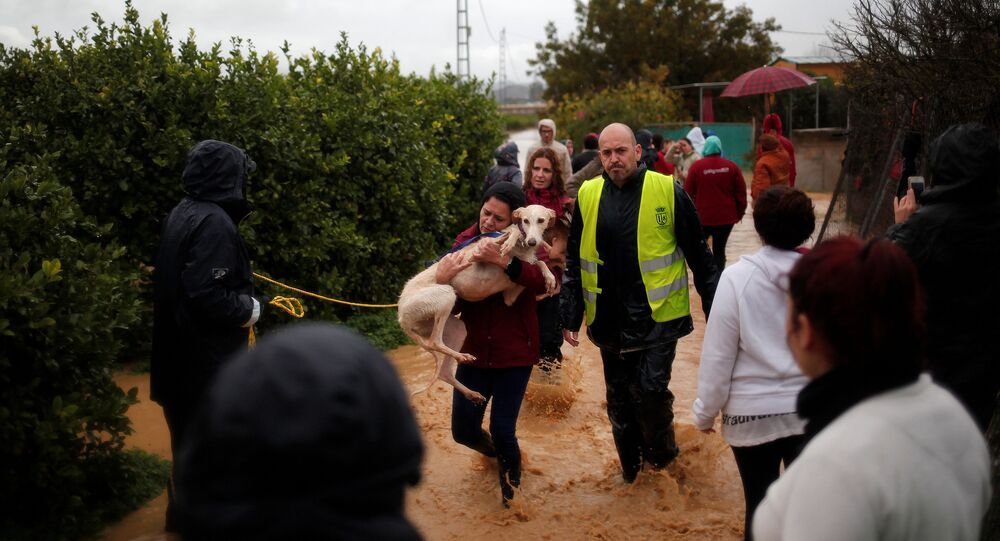 A volunteer carries a greyhound after it was rescued in a flooded area from the refuge Greyhounds in family after heavy rains at Donana neighborhood in Cartama, near Malaga, southern Spain, December 4, 2016