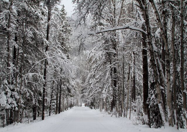 Winter Wonderland in Apgar Village. Photo: David Restivo, NPS