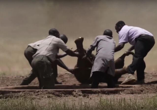 Adorable Baby Elephant Rescued From Waterhole
