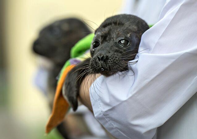 Seal cub
