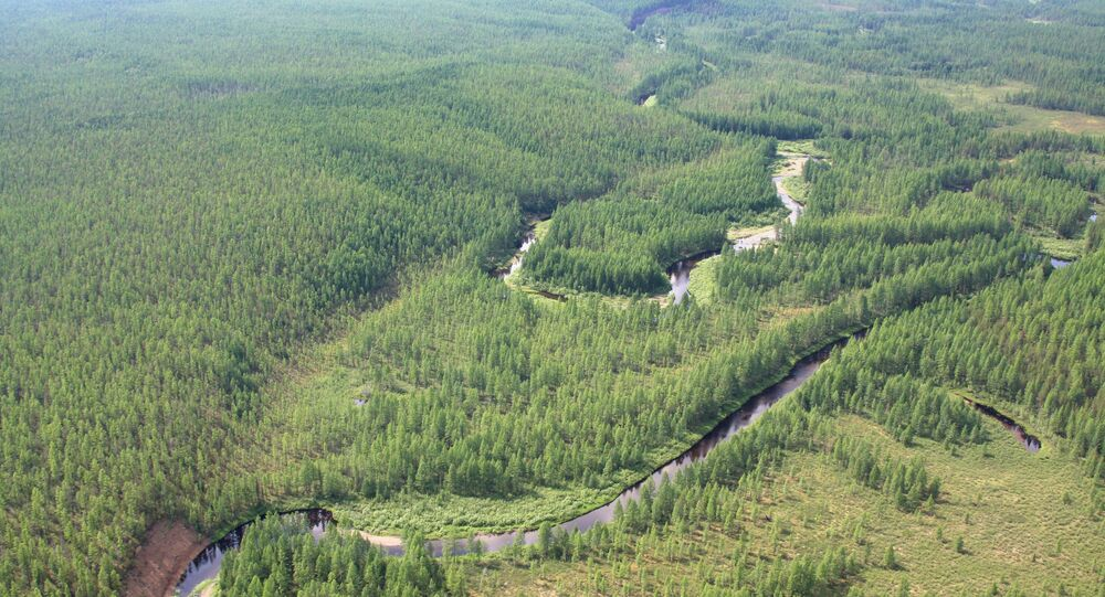 The taiga near the site of the Tungus meteorite fall. (File)
