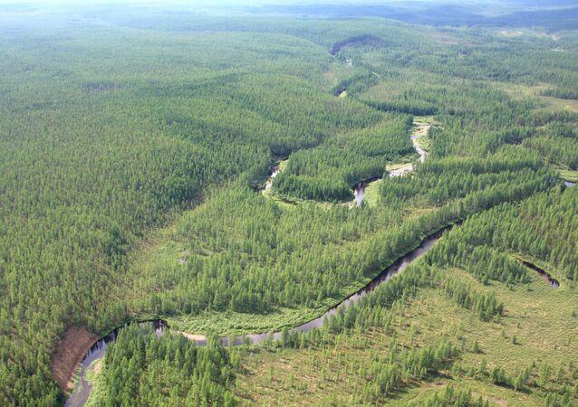 The taiga near the site of the Tungus meteorite fall. (File)