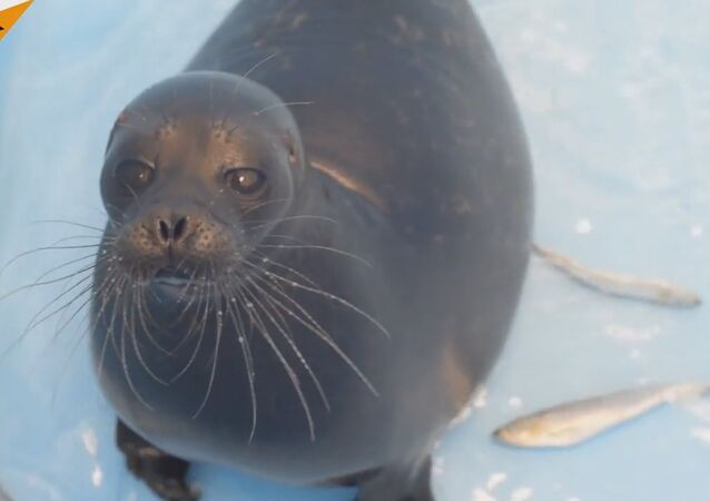 Kroshik The Seal Moves To New Home