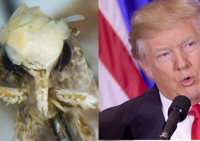 Combination image of Neopalpa donaldtrumpi and Donald Trump