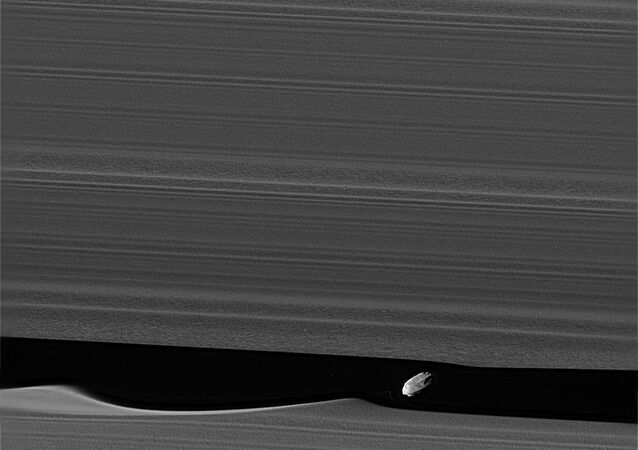 A NASA photo of Daphnis, an unusual moon of Saturn.