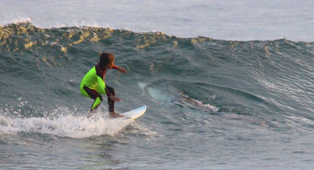 10-year-old Eden Hasson surfs near what is believed to be a great white shark at Samurai Beach, Port Stephens, Australia.