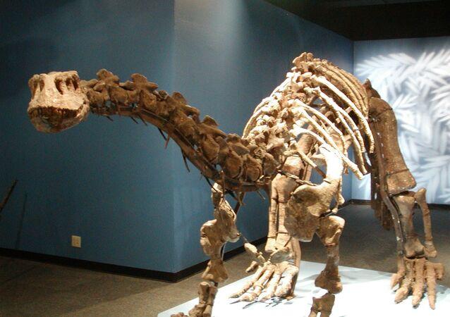 Lufengosaurus magnus from the Beijing Museum of Natural History