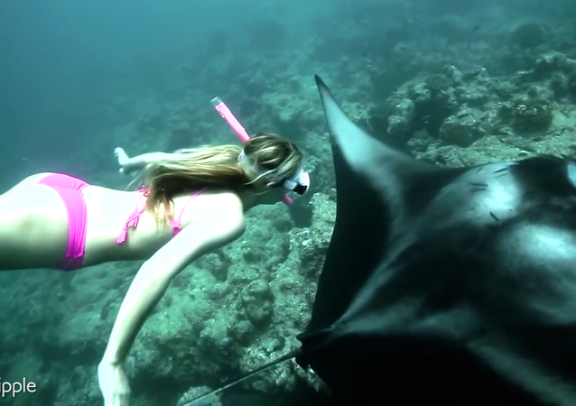 Freediving With Giant Manta Rays