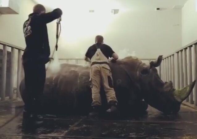 Rhino washing