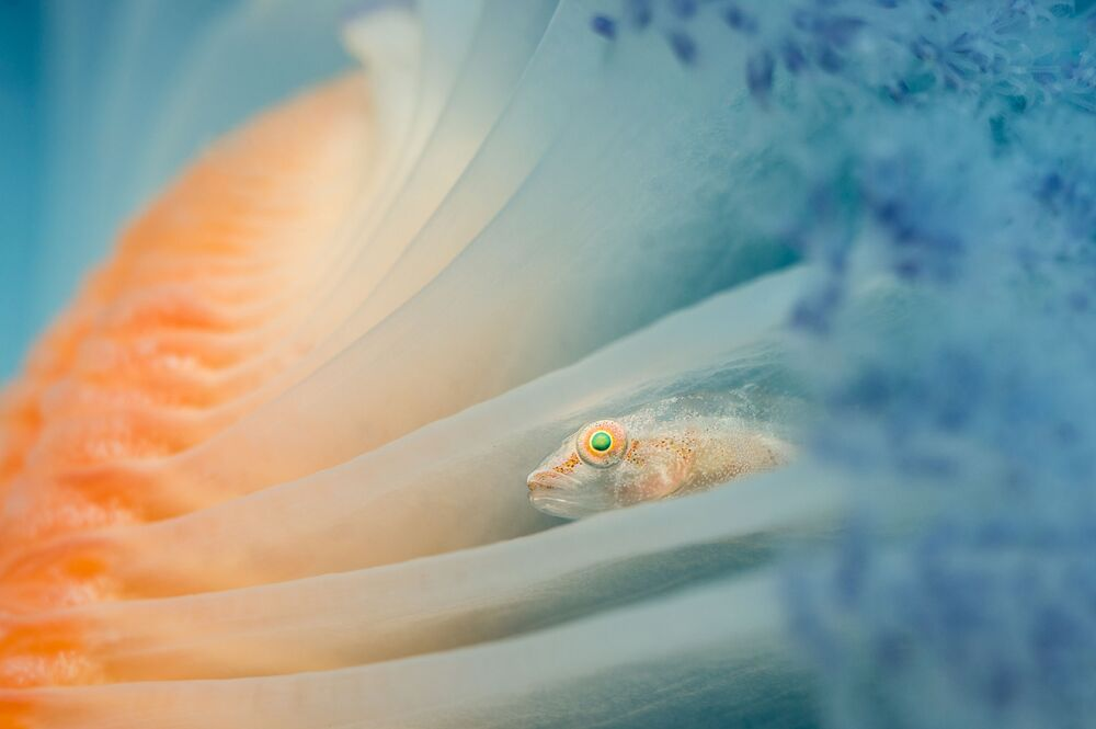 Underwater Photographer of the Year Winners Show Aquatic Beauty Across the Globe
