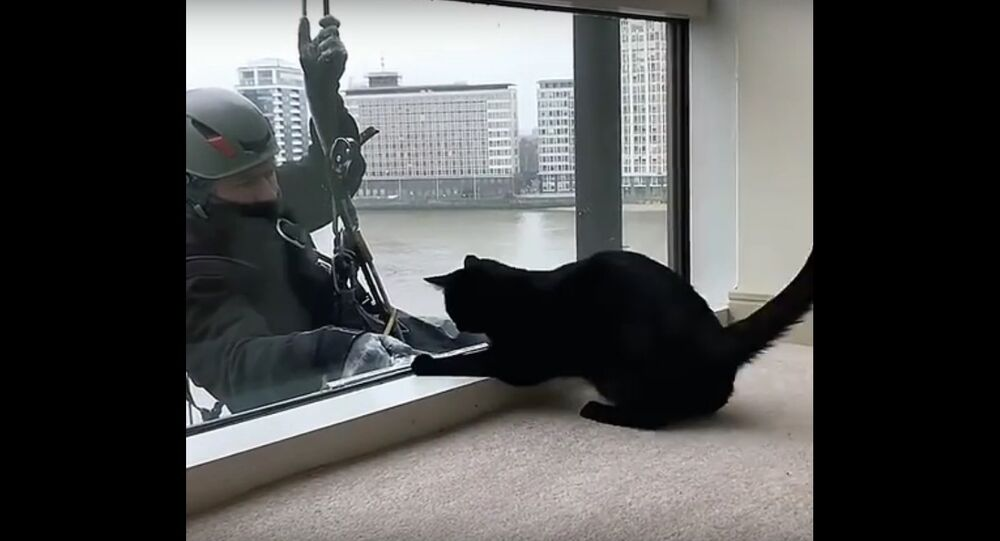 Window washer plays with cat while cleaning
